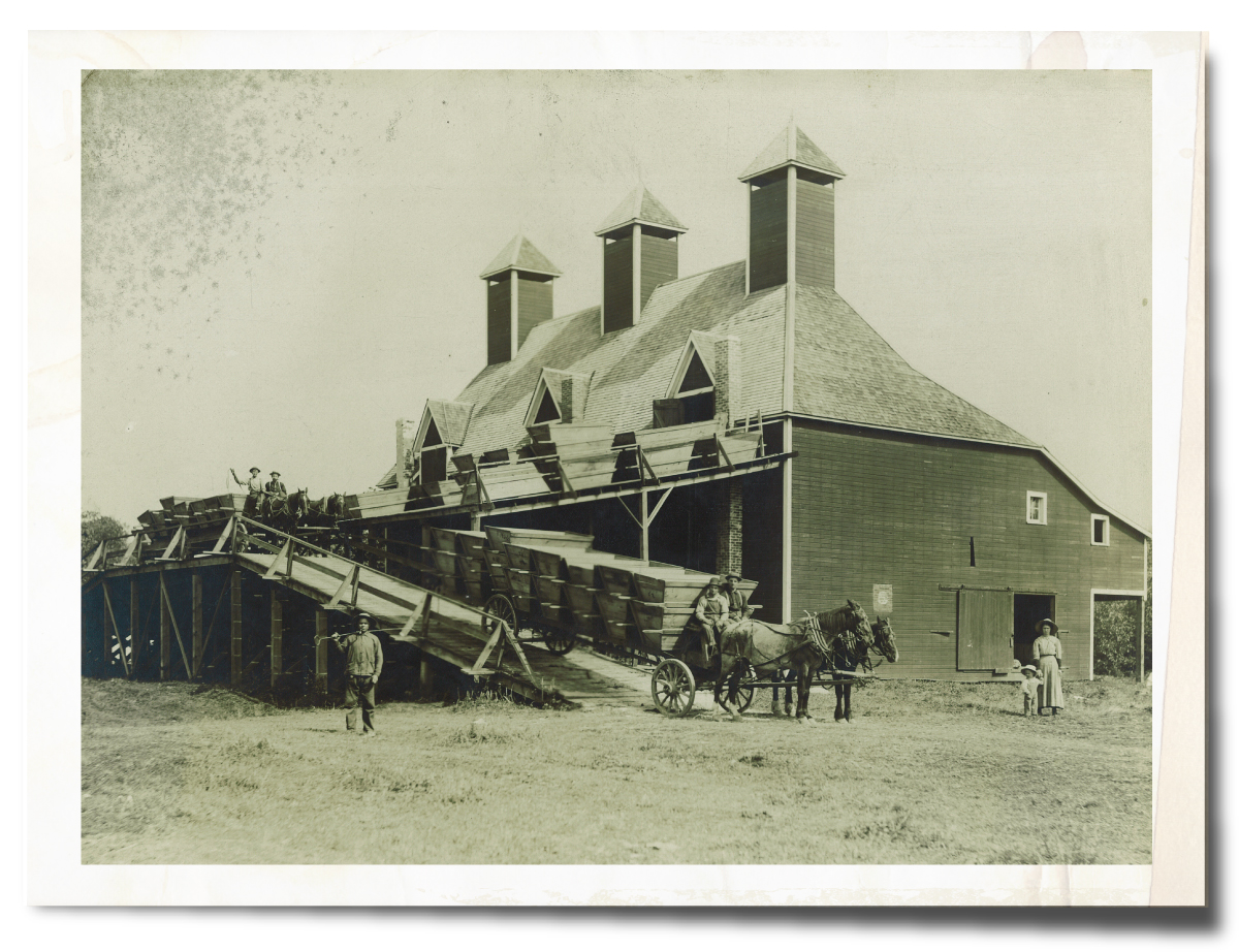 Historic Picture of Spooner Berry Farms in Puyallup, Washington