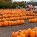 Now hiring for our October Harvest Festival